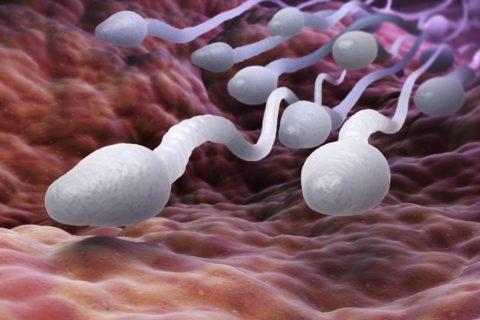 Η ποιότητα σπέρματος επηρεάζεται από φάρμακα για τις αλλεργίες – Τι πρέπει να ξέρετε